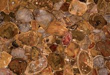 Australian Petrified Wood